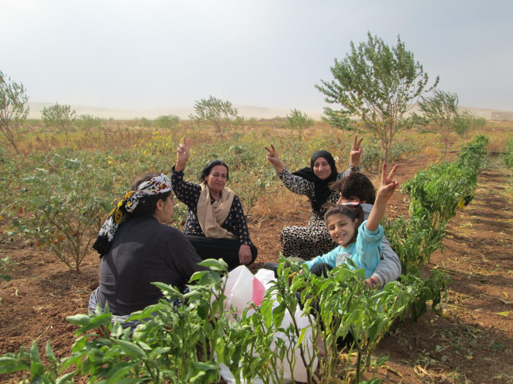 """Öcalan: """"Großer Patriotismus bedeutet Wiederaufforstung und das Pflanzen von Bäumen"""""""